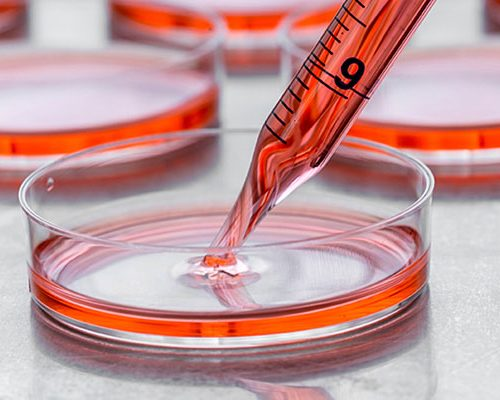 How do Primary cells differ from Continuous cell lines?
