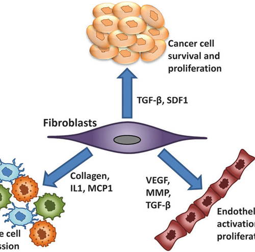 Exploring the mechanisms of gastric cancer using primary culture