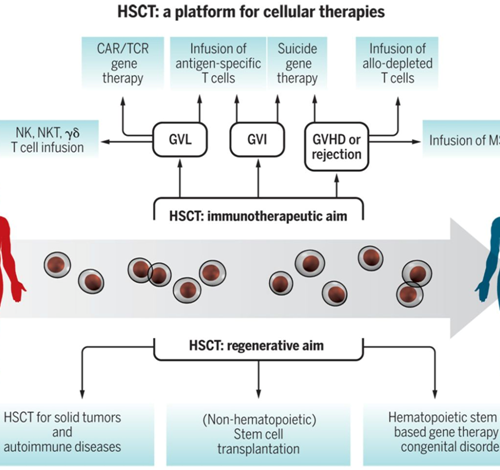 Hematopoietic Stem Cells and their promise