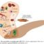 Role of MSCs