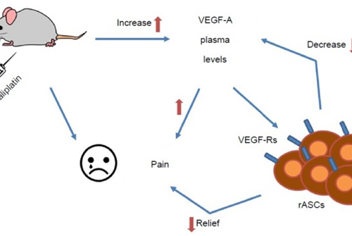 Mesenchymal Stem Cells For Pain Relief