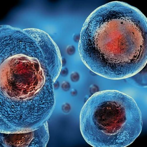 Stem cells pave the way ahead