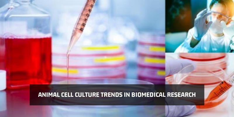 Animal Cell Culture Trends in Biomedical Research