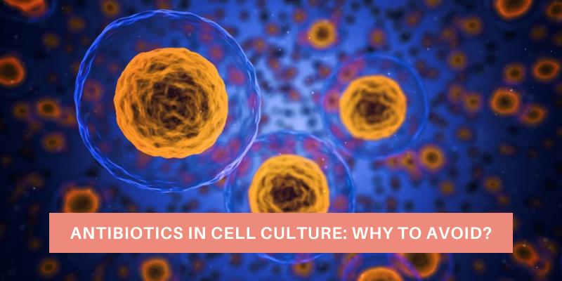 Antibiotics In Cell Culture: Why To Avoid?