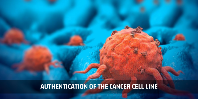 Authentication Of The Cancer Cell Line