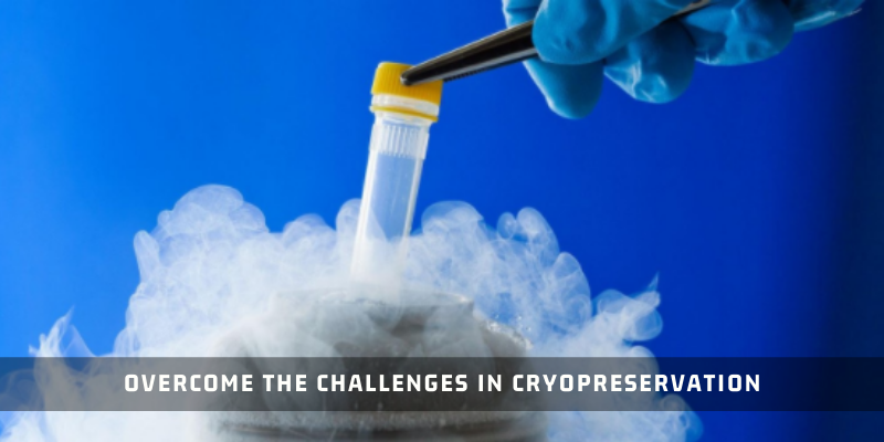 How To Overcome The Challenges In Cryopreservation?