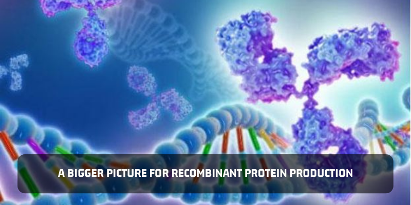 A Bigger Picture For Recombinant Protein Production
