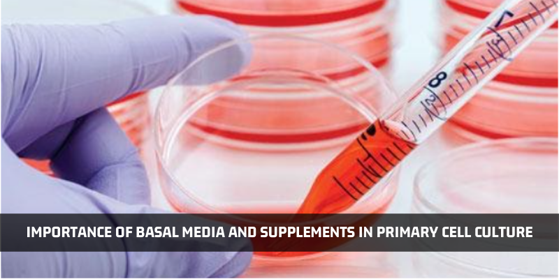 Importance Of Basal Media And Supplements In Primary Cell Culture