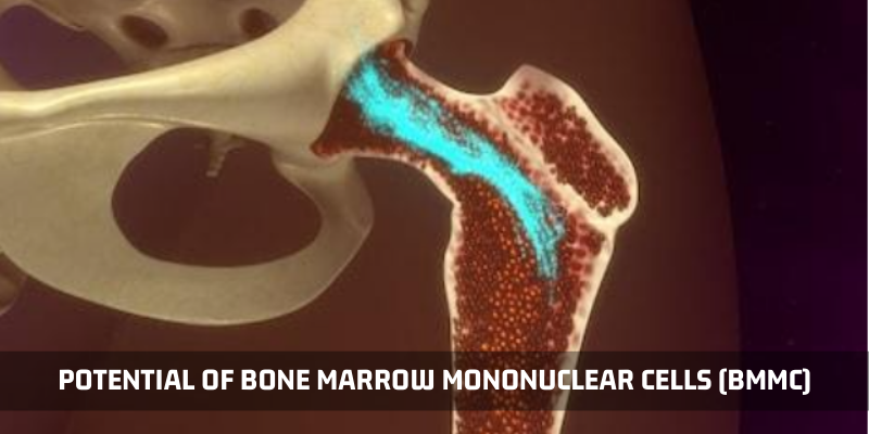 The Potential Of Bone Marrow Mononuclear Cells (BMMC)