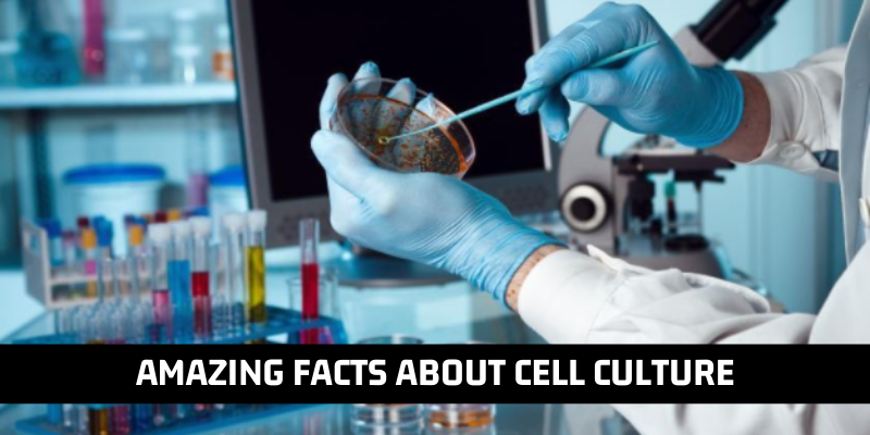 10 Amazing Facts About Cell Culture You Should Not Miss