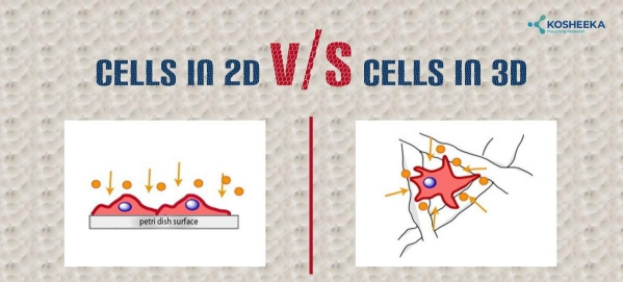 2D vs 3D Cell Cultures – What's The Difference?