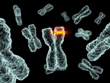 kosheeka immortalized primary cells