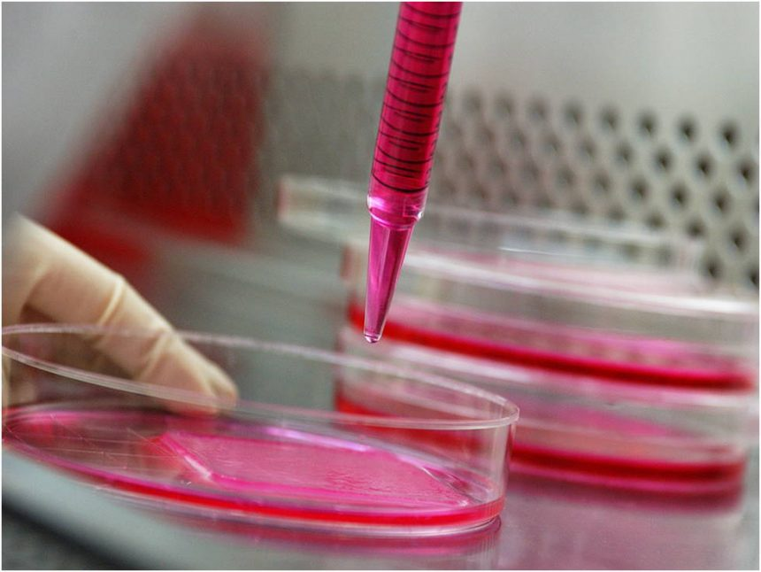Cultural Consistency: 5 tips for successful animal cell culture experience